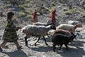 Herding sheep 110907-A-ZU930-014.jpg