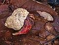 Hermite Crab Dry Tortugas.jpg