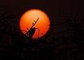 Heron at dawn.jpg