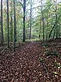Hiking trail in Sevenmile Creek Natural Area 01.jpg