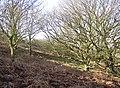 Hillside under Fixby Ridge, Fixby - geograph.org.uk - 703136.jpg