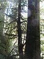 Hoh Rainforest - Olympic National Park - Washington State (9779998482).jpg