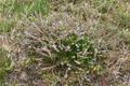 Hoher Vogelsberg Gackerstein Oberweide Breungeshain 344580 Detail Ericaceae.png