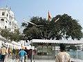 Holy Jujube tree - panoramio.jpg