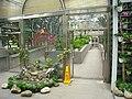 Hong Kong Botanical Gardens - IMG 9660.JPG
