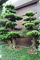 Hong Kong Nan Lian Garden IMG 4878.JPG