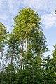 Horn-Bad-Meinberg - 2015-05-27 - LIP-060 Buchenwald bei Bellenberg (37).jpg
