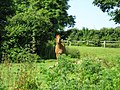 Horse in very nettley field - geograph.org.uk - 844823.jpg