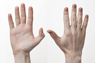 Hand Extremity at the end of an arm or forelimb