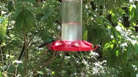 File:Hummingbirds in Costa Rica.webm