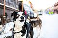 Hund (8435544443).jpg