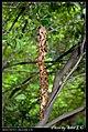 Hymenoptera (6022022935).jpg
