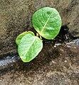 IMG leaf.jpg