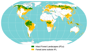 Intact forest landscape - Image: Iflmap