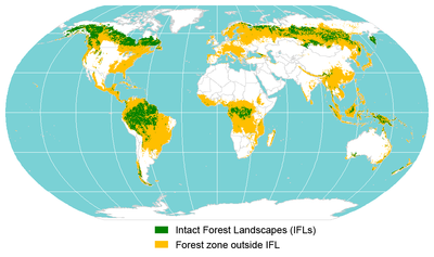 Worksheet. Intact forest landscape  Wikipedia