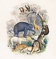 Illustration from A History of the Earth and Animated Nature by Oliver Goldsmith from rawpixel's own original edition of the publication 00121.jpg