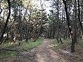 Imazu Pine Grove 16.jpg