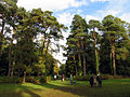 In the vicinity of Down Plantation, Westonbirt - geograph.org.uk - 69612.jpg