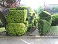 Interesting hedge bordering the tennis courts opposite Admiralty House - geograph.org.uk - 899972.jpg