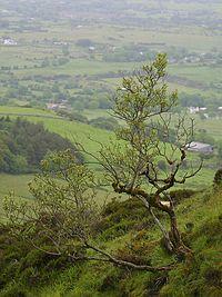 Ireland bush.jpg