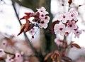 It's beginning to feel like springtime.jpg