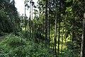 J29 914 »Wolfsschlucht« (unten).jpg