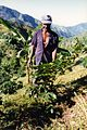 Jamaica Coffee farmer in the blue mountains - panoramio.jpg