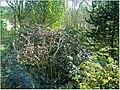 January Frost Botanic Garden Freiburg - Master Botany Photography 2014 - panoramio (24).jpg
