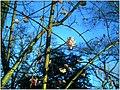January Frost Schneeball Botanic Garden Freiburg - Master Botany Photography 2014 - panoramio.jpg