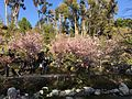 Japanese Friendship Garden (Balboa Park, San Diego) 21 2016-05-14.jpg