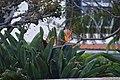 Jardim Botânico da Madeira DSC 0273 (14696818491).jpg