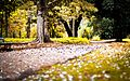 Jardim Botânico em Primavera.jpg