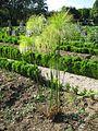 Jardin botanique Dijon 051.jpg