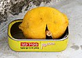 Jerusalem-Mauerrundgang-60-rauchende Zitrone in Sardinenbuechse-2010-gje.jpg