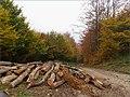 Jeseň - panoramio (8).jpg
