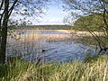 Jezioro Trzemeszno - panoramio.jpg
