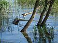 Jezioro Turawskie - okolice przystani.jpg