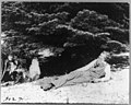 John Muir, full-length portrait, facing left, lying on rock with trees in background LCCN95514641.jpg