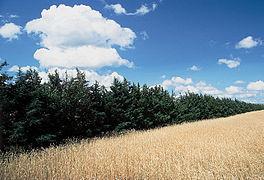 Juniperus virginiana habitat.jpg