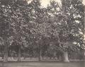 KITLV 100524 - Unknown - Park, presumably in Kashmir in British India - Around 1870.tif