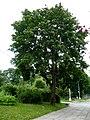 Kamyanets-Podilsky Khmelnytska-Biogrupa Vidrodzhennia square-general view-2.jpg