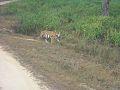 Kanha National Park 2.jpg