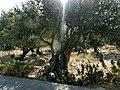 Karidi - panoramio.jpg
