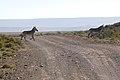 Karoo National Park 2014 30.jpg