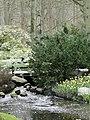 Keukenhof - panoramio (21).jpg