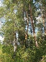 Kharkiv Botanical Garden 02.jpg