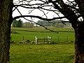 Kilmacolm farm - geograph.org.uk - 751910.jpg