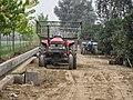 Kinnow Orchard - panoramio (7).jpg