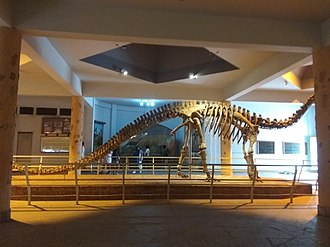 Kotasaurus - Mounted skeleton of Kotasaurus