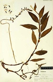 Virtual herbarium
